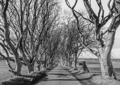 The Dark Hedges in Nordirland
