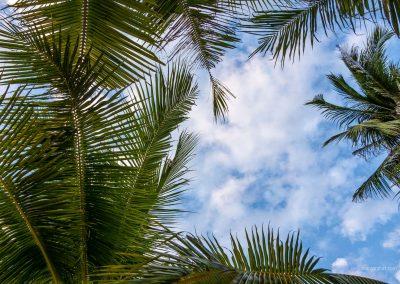 Palmen auf Palawan auf den Philippinen