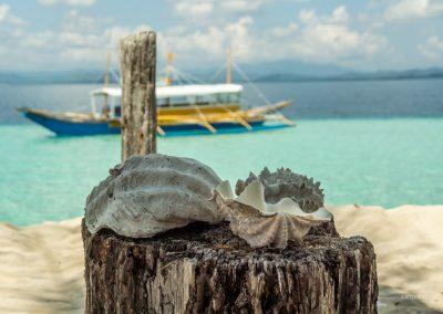 Muscheln auf den Philippinen