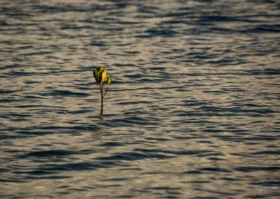 Stilles Meer auf Palawan